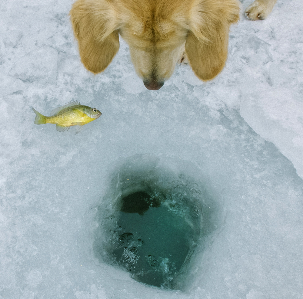 Ice Fishing, Winter 2014 - Todd Roeth
