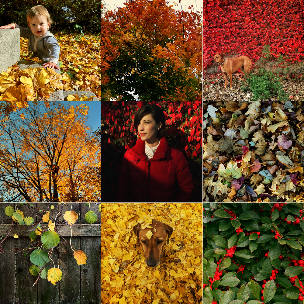 Autumn Grid - Todd Roeth