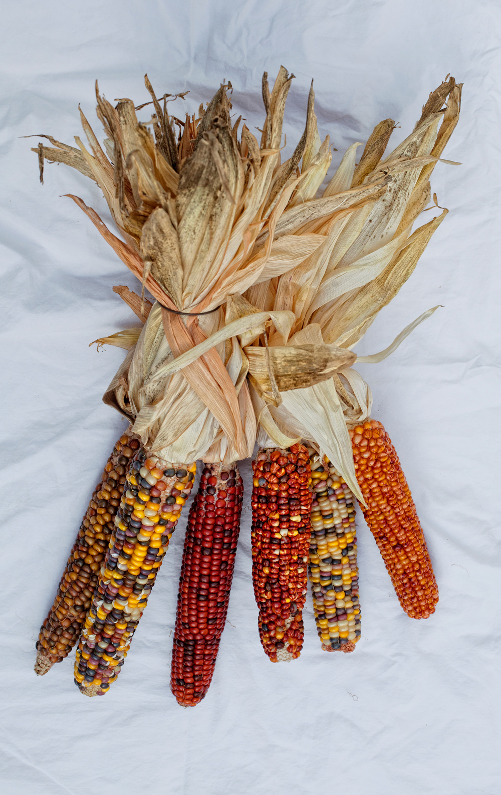Indian Corn - Todd Roeth